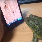 Лягушка играет в телефон?