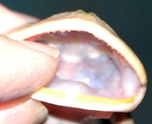 Ответыmailru где находятся глоточные зубы у рыб