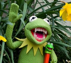 Есть ли у жаб зубы?
