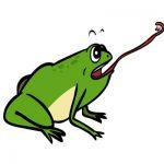 Что едят жабы и лягушки?