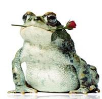 Сказка про жабу и розу